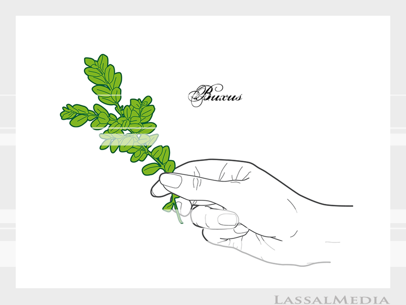 LassalMedia – Final vector illustrations for SolidGreen (hand holding plant samples of Buxus)