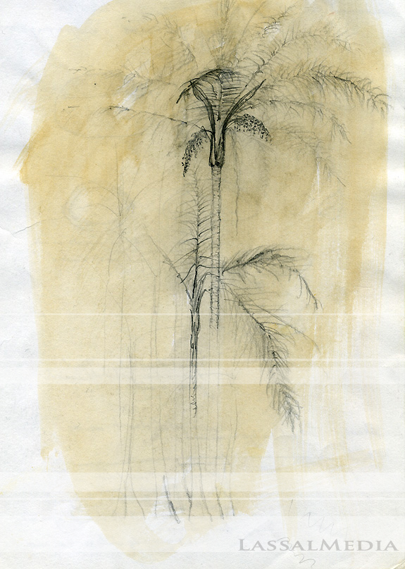 LassalMedia, Traditional Palmtrees, pencil drawing on white paper, coffee