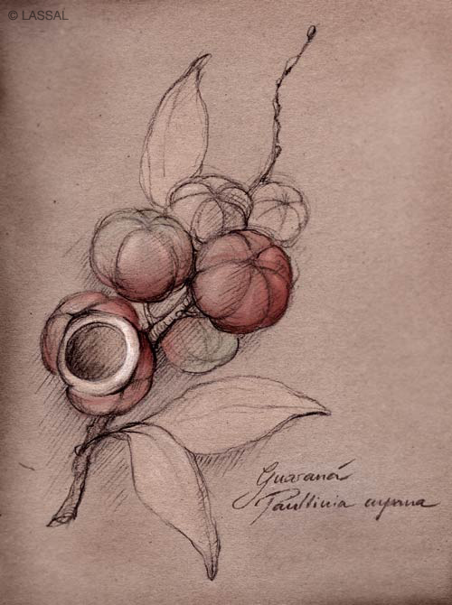 LassalMedia – traditional Guaraná ink drawing on paper with calligraphy